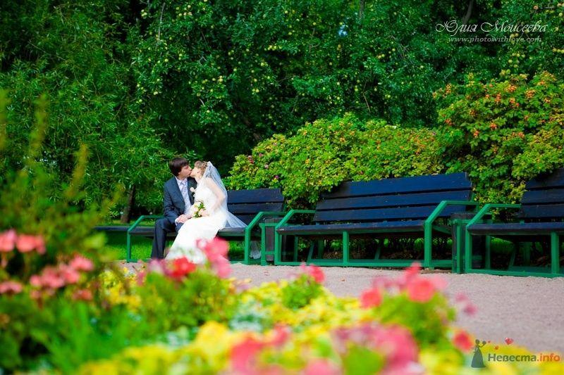 Фото 62615 в коллекции Мои фотографии - Свадебный фотограф Моисеева Юлия