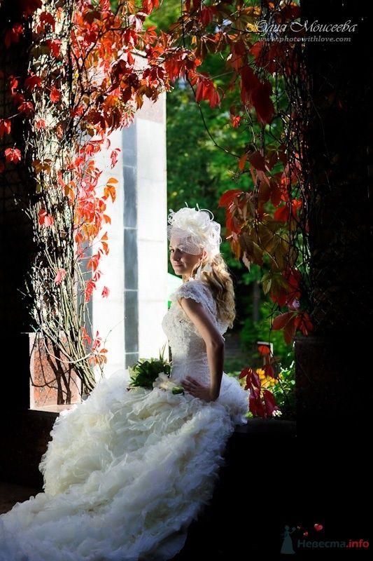 Фото 64504 в коллекции Мои фотографии - Свадебный фотограф Моисеева Юлия