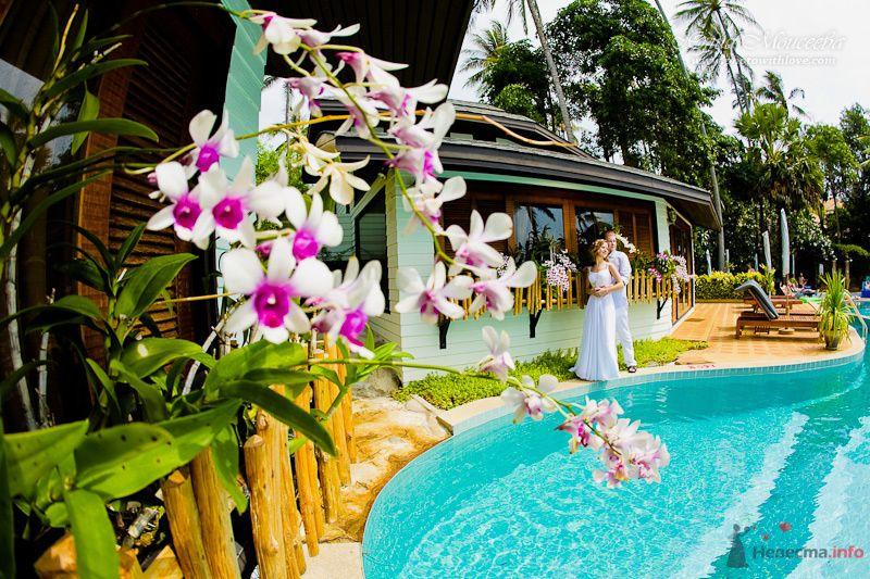 свадебный фотограф Моисеева Юлия - фото 80353 Свадебный фотограф Моисеева Юлия