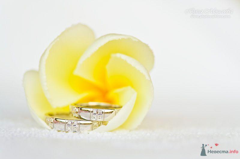символические свадебные церемонии - фото 80361 Свадебный фотограф Моисеева Юлия