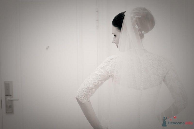 Фото 53703 в коллекции свадьба-фотограф елена кузнецова - ларина т