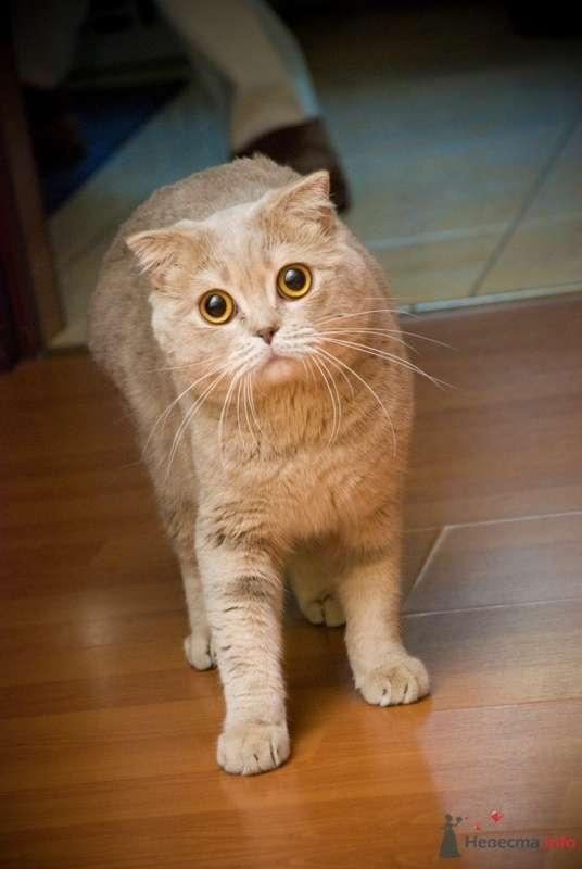 Фото 48583 в коллекции Мой любимка кот! - katsonya