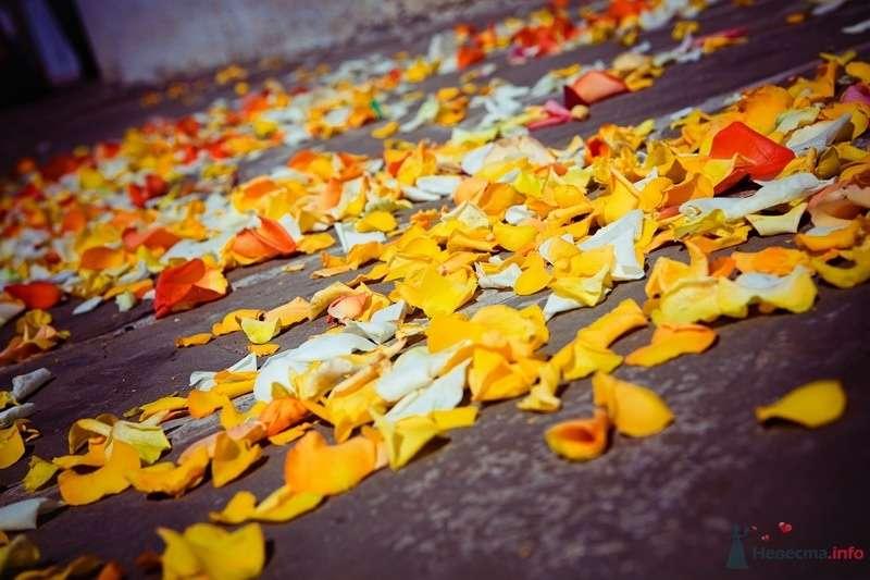 Фото 61800 в коллекции Моя оранжевая свадьба - yanechka