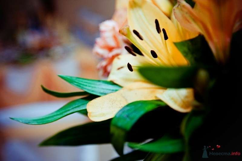 Фото 62473 в коллекции Моя оранжевая свадьба - yanechka