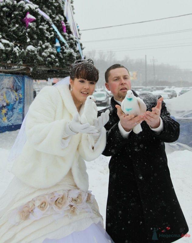 Фото 68403 в коллекции Как Кошка замуж выходила 08.01.2010 - Koshka_Lu