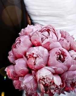 Фото 57312 в коллекции мои фотографии - Свадебный распорядитель Ольга Фокс