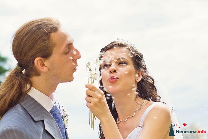 Жених и невеста на свадебной прогулке. Одуванчики.