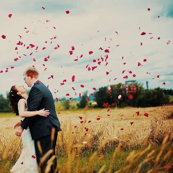 Жених и невеста стоят, прислонившись друг к другу, в пшеничном поле - фото 55143 Свадебный распорядитель - Бедрикова Оксана
