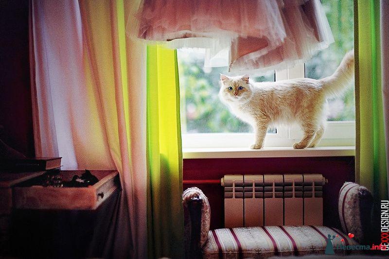 Фото 98643 в коллекции Мои фотографии - Chanel№5