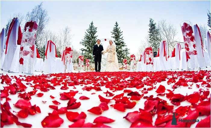 Белая дорожка, усыпанная лепестками красных роз, на выездной регистрации - фото 112747 Chanel№5