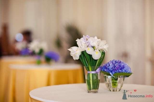 Монобукеты из голубых гортензий и белых орхидей в стеклянных стаканах. - фото 69628 Bellapupa