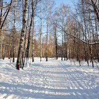 Зима, февраль