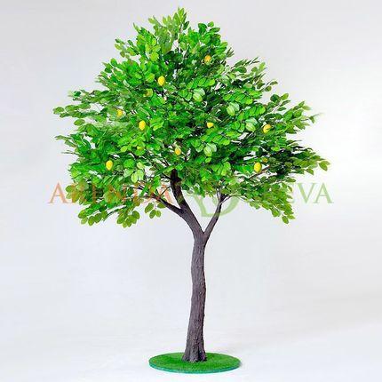 "Аренда дерева ""Лимон"", 3 м."