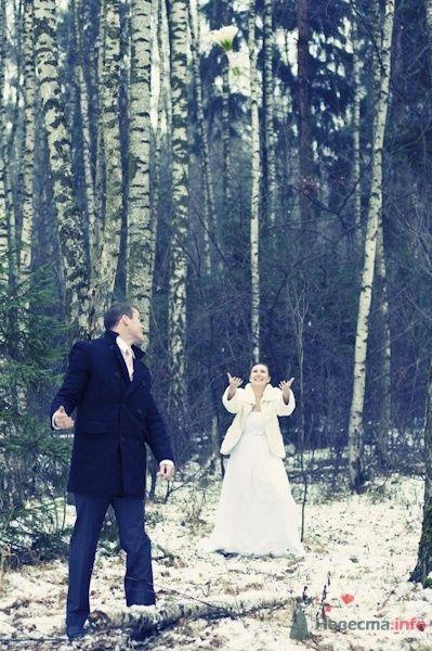 Фото 57365 в коллекции Свадебный фотограф - мояСовесть