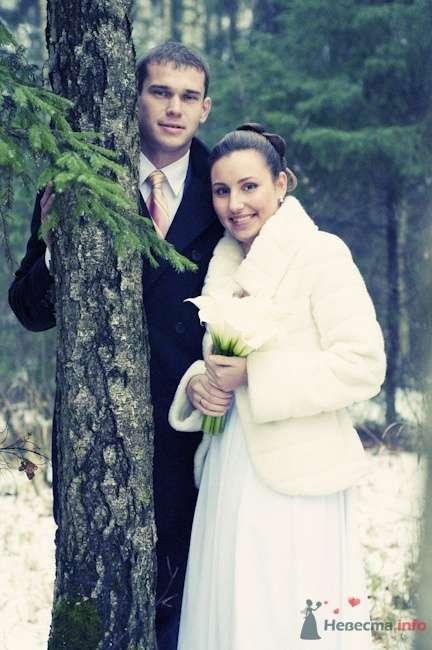 Фото 57366 в коллекции Свадебный фотограф - мояСовесть