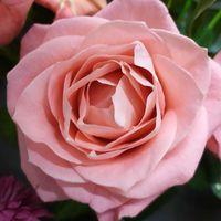 Цветы для оформления букета