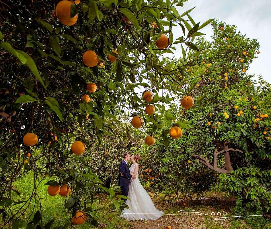 Фото 10972790 в коллекции Портфолио - Sunny Cyprus Wedding - свадебное агентство