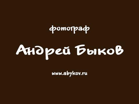 Андрей Быков Презентация